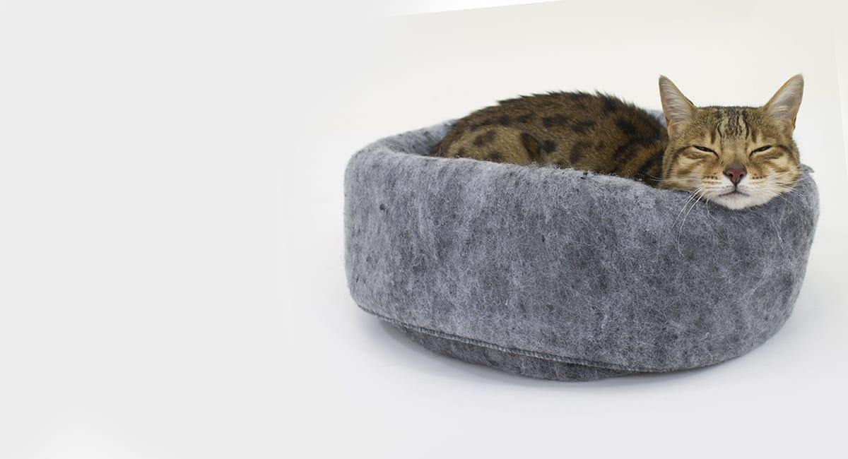 cat curled up in cat bed