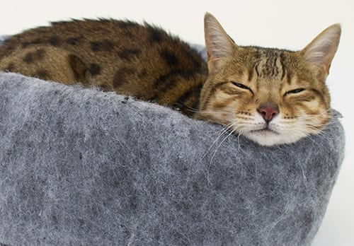 Cat_Beds_Cat_HP_crop
