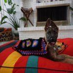 carolina pet company asheville best friend dog bed